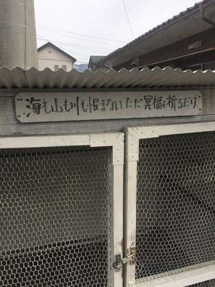 umimoyamamo